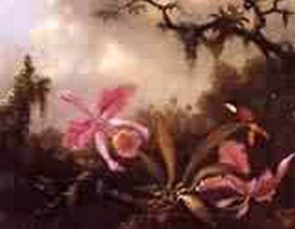 Orchids and Crimson Topaz Hummingbird 1871jpeg